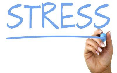 """CIBO E STRESS: IL CERVELLO DEL """"GUT"""" (PRIMA PARTE) – Dott.ssa Cecilia Pintori"""